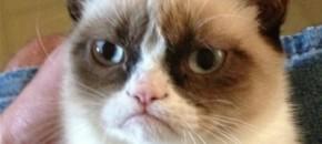 unique-selling-proposition-grumpy-cat